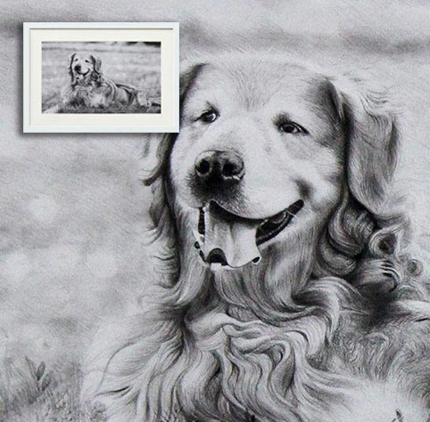 Pencil Sketch Dog Portrait