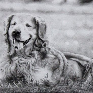 Dog Pencil Sketch Portrait